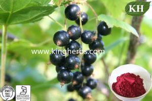 Anthocyanidins 5%, 25% Black Currant Extract pictures & photos