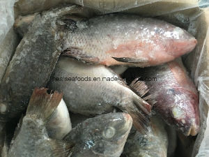 Frozen Fish Frozen Tilapia for Sale pictures & photos