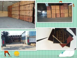 Film Faced Plywood, Shuttering Plywoodconstruction Plywood 1250*2500*9-21mm pictures & photos