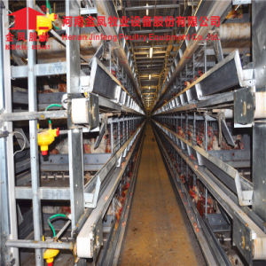 China a Type Automatic Poultry Chicken Cage pictures & photos