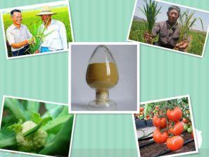 NPK Amino Acid Organic Compound Feritilizer with Minronutrient pictures & photos