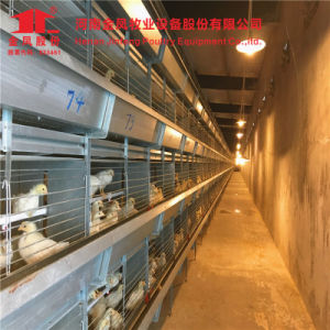Automatic H Type Battery Layer Chicken Cage of Poultry Equipment pictures & photos