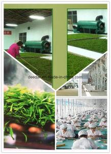 New Season Green Tea pictures & photos