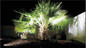 3X3w IP65 LED Garden Lighting with Ce pictures & photos