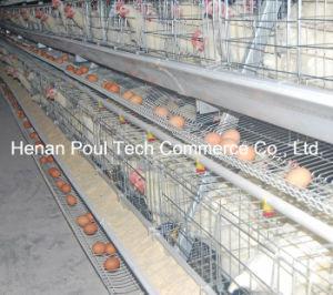 Hot Sale Galvanization Breeder Chicken Cage (A type) pictures & photos