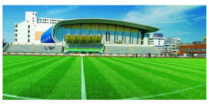 40-60cm Cheap Customized Football Synthetic Grass for Soccer Pitch Wy-15 pictures & photos