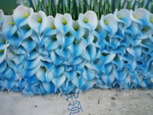 High Quality Artificial Flowers of Calla Lily Gu-Jy929214502 pictures & photos