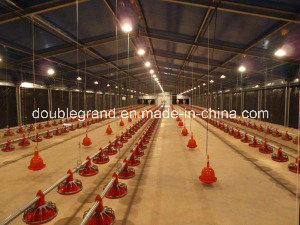 Prefabricated Steel Structure Poultry House/Chicken House (DG6-006) pictures & photos