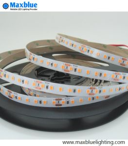LED Warm White/White Lighting DC24V/12V LED Rope Light/LED Strip Light for Promotion pictures & photos