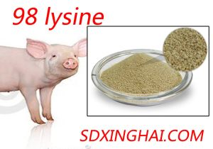 Factory Supply Lysine with Low Price