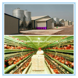 Customized Modular Steel Structure Building for Chicken Feeding pictures & photos