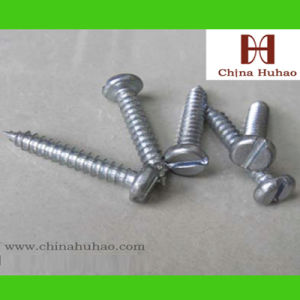 Screw/Self Tapping/Slotted Pan Head Zinc Coated Self Tapping pictures & photos