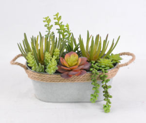 Mixed Succulent Artificial Plant for Decoration of Any Public Places-Home/Office/Bar with Iron Pots
