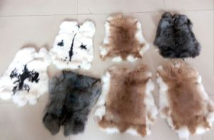 Natural Genuine Raw Chinchilla Rabbit Fur Pelt Plate Real Black Rex Rabbit Skin pictures & photos