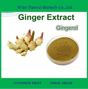 High Quality 5% Ginger Root Extract, Ginger Extract Powder pictures & photos