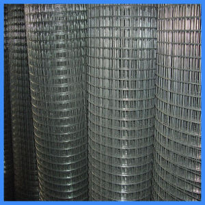 Hot DIP Galvanized Welded Wire Mesh Factory Manufaturer pictures & photos