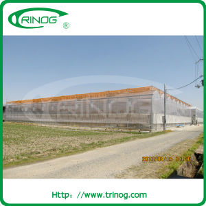Polycarbonate Greenhouse with twin wall pictures & photos