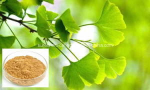 High Quality Ginkgo Biloba Extract pictures & photos