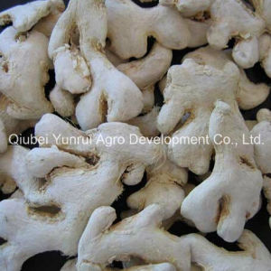 Chinese Dry Yellow Ginger Peeled