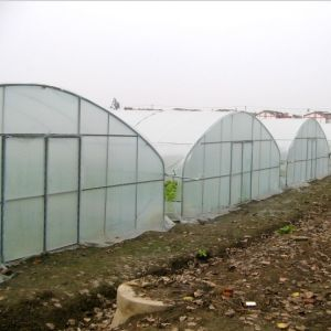 The Best Agricultural Plastic Covered Tunnel Green House pictures & photos