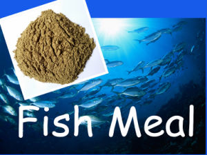 Fish Meal with Competitive Price (protein 65% 72%) pictures & photos
