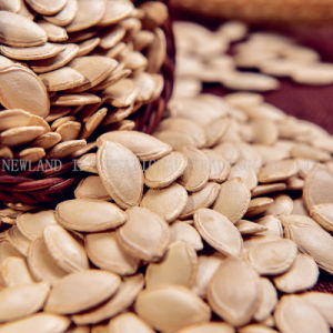 New Crop Organic Shine Skin Pumpkin Seeds From China with Top Quality and Competitive Price pictures & photos