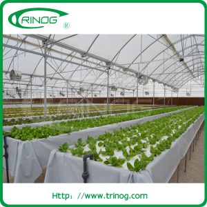 High light transmission greenhouse for herb growing pictures & photos