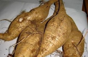 Pueraria Root Extract Kudzu Root Extract pictures & photos