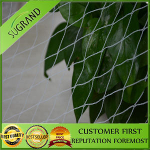 Anti Bird Net Product Made in China pictures & photos