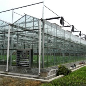 Commercial Agricultural Glass Greenhouse pictures & photos