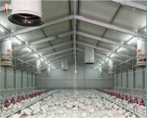 Environmental Control Type Chicken House with Equipment pictures & photos