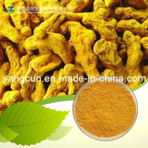 Turmeric Extract Curcumin Powder CAS No.: 458-37-7 pictures & photos