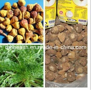 Wholesale Gold Peru Maca Yunnan Dried Genuine Sex Improvement Health Care Tea pictures & photos