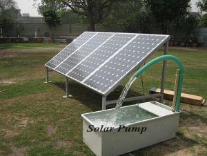 40m 24V DC Solar Water Pump 3cbm Per Hour 768W Lowest Voice pictures & photos