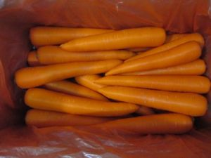 New Crop Carrot pictures & photos