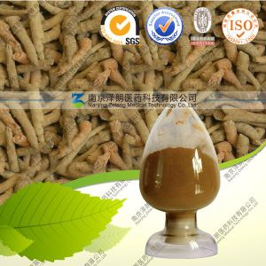 Factory Supply Panax Notoginseng Extract/ Sanqi Extract pictures & photos