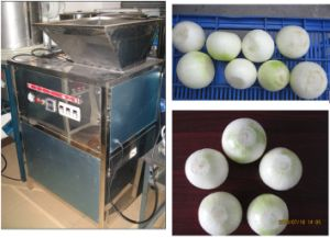 Stainless Steel Vegetable Onion Peeling Peeler Processing Machine (WSBP) pictures & photos