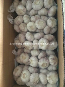 Pure White Garlic pictures & photos