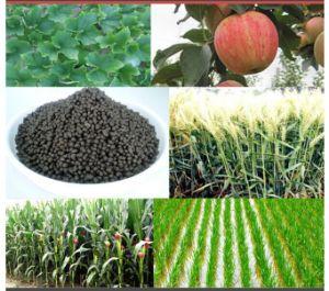 Various Kinds Compound Diammonium Phosphate Fertilizer 18-46-0 DAP Fertilizer pictures & photos