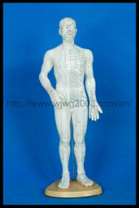 Human Body Acupuncture Model (M-1-50, 48 0r 46) pictures & photos