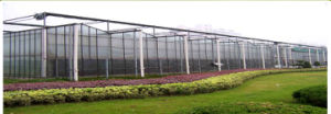 Venlo Making Warmhouse/Greenhouse Use Galvanized Steel Tube PC Cover pictures & photos