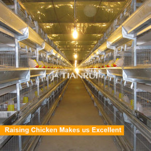 Tianrui design pullet battery cages used in chicken farm project pictures & photos