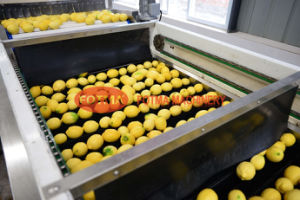 Fruit & Vegetable Washing / Waxing / Grading / Sorting /Processing Machine pictures & photos