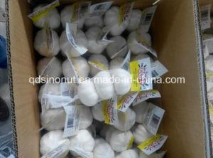 Pure White Garlic 3p 10kg Carton pictures & photos