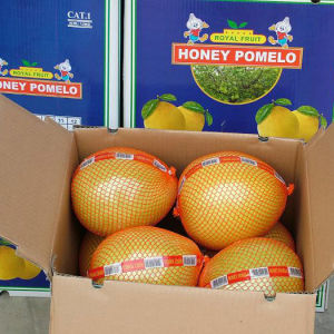 Good Quality of Fresh Sweet Pomelo pictures & photos
