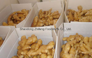 2017 Fresh New Ginger with Good Price pictures & photos