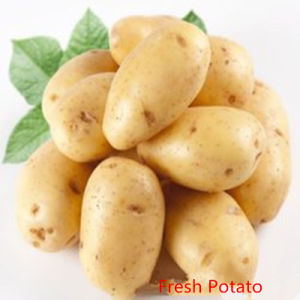 China Fresh Potato Holland Veriety pictures & photos