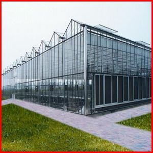 China Supplier Venlo Agriculture Glass Greenhouse for Sale pictures & photos