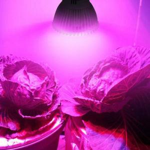 8W E27 GU10 E14 Full Spectrum LED Plant Growing Lamp pictures & photos