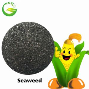 Agriculture Organic Brown Seaweed Fertilizer pictures & photos
